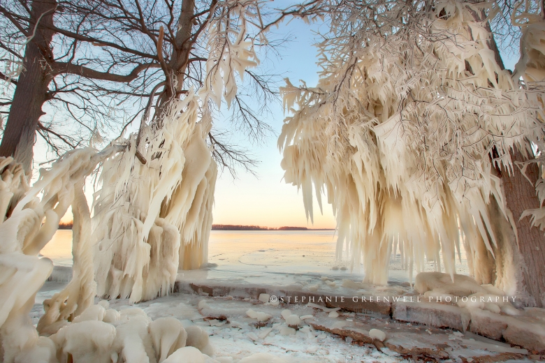 reelfoot lake ice trees winter frozen landscape northwest tennessee photography stephanie greenwell