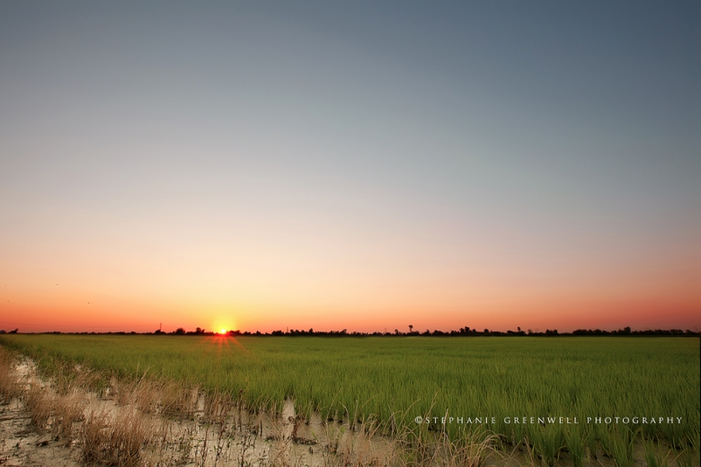 landscape silhouette wardell missouri rice field 16-35 southeast missouri photographer stephanie greenwell