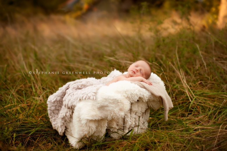 newborn in a field forest baby in basket southeast missouri photographer stephanie greenwell
