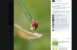 macro photography facebook screenshot southeast missouri photographer stephanie greenwell
